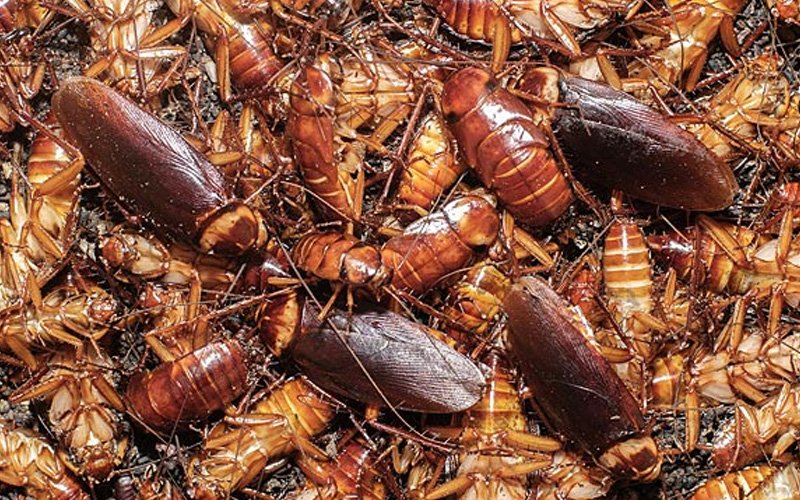 3 spots cockroaches consider heaven in your home