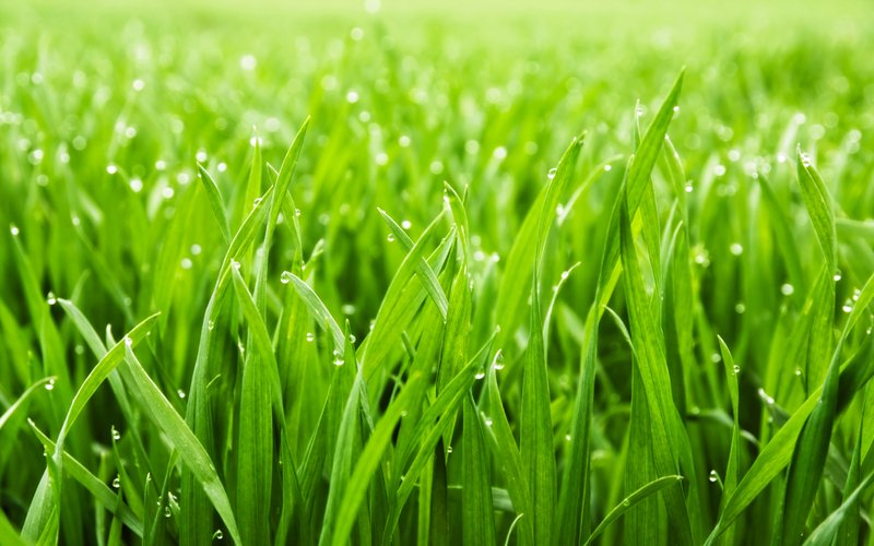 4 easy ways to plant your own grass