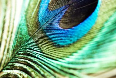 The subtleties of using peacock motifs